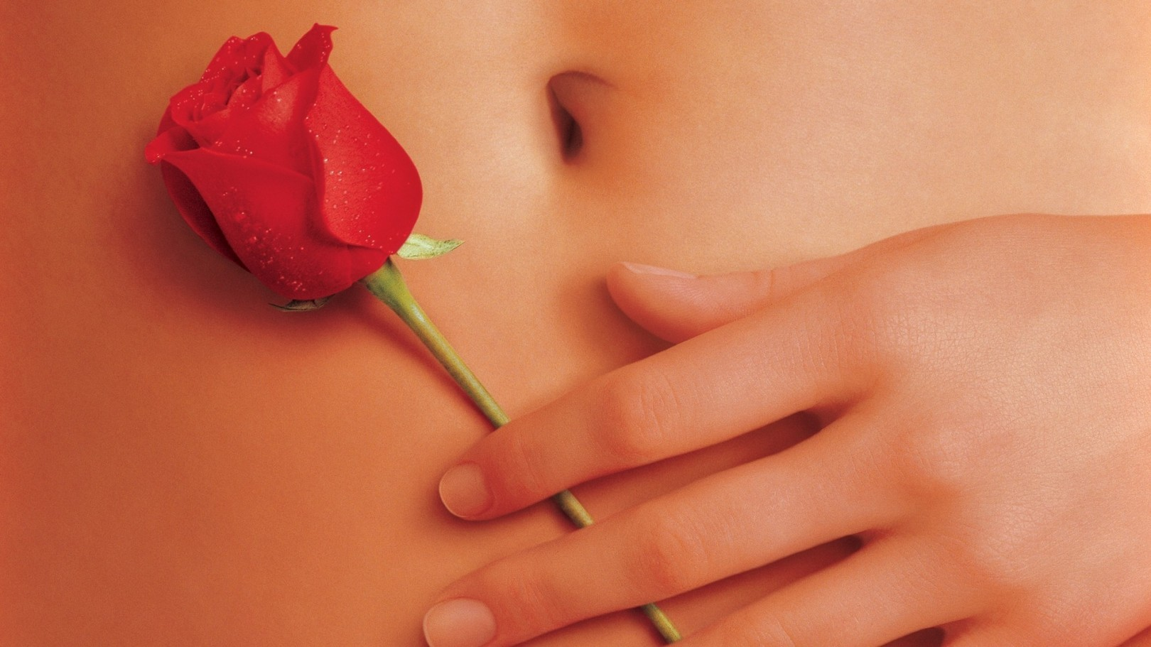 American Beauty 1999 Motion Picture Blog